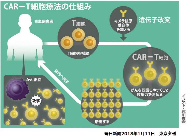 アステラス製薬、新しいCAR細胞療法のXyphos Biosciencesを買収 - 化学 ...